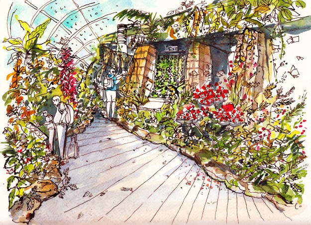 butterfly-garden-somali-roy